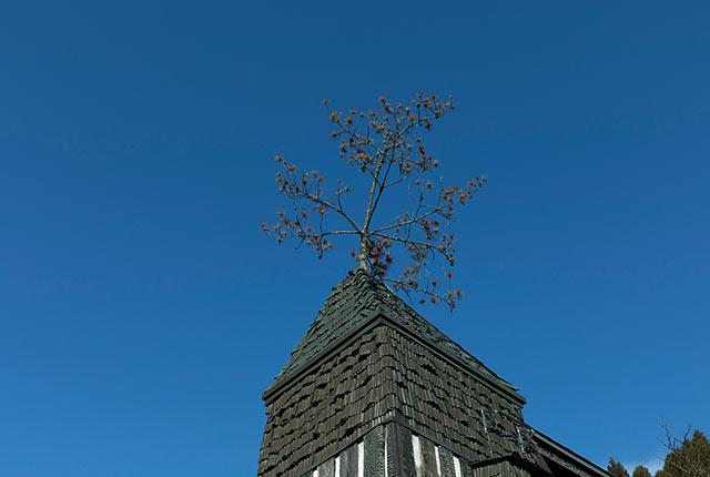 屋根のてっぺんにある松の木