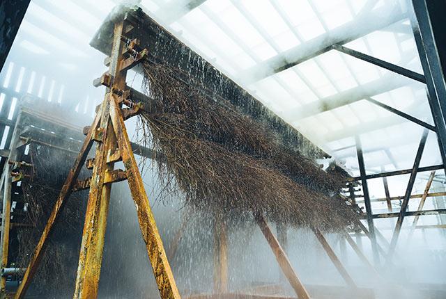 温泉が竹の表面を流れる