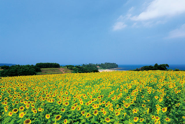 長崎鼻の景色
