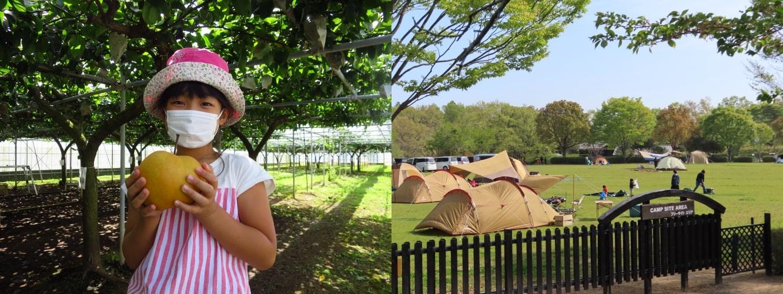果樹園とキャンプサイト