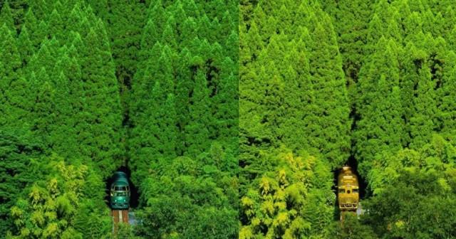 森の中から現れる久大本線
