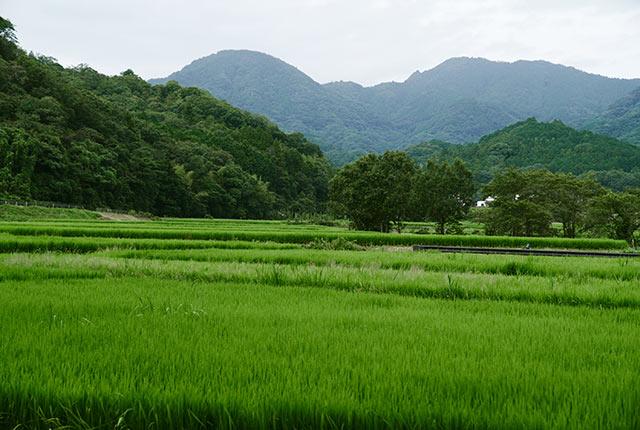 田染荘の水田